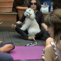 yoga dogs video
